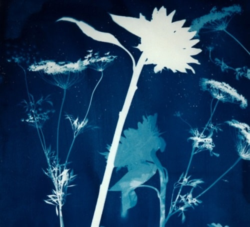 Painting with Light: Cyanotype