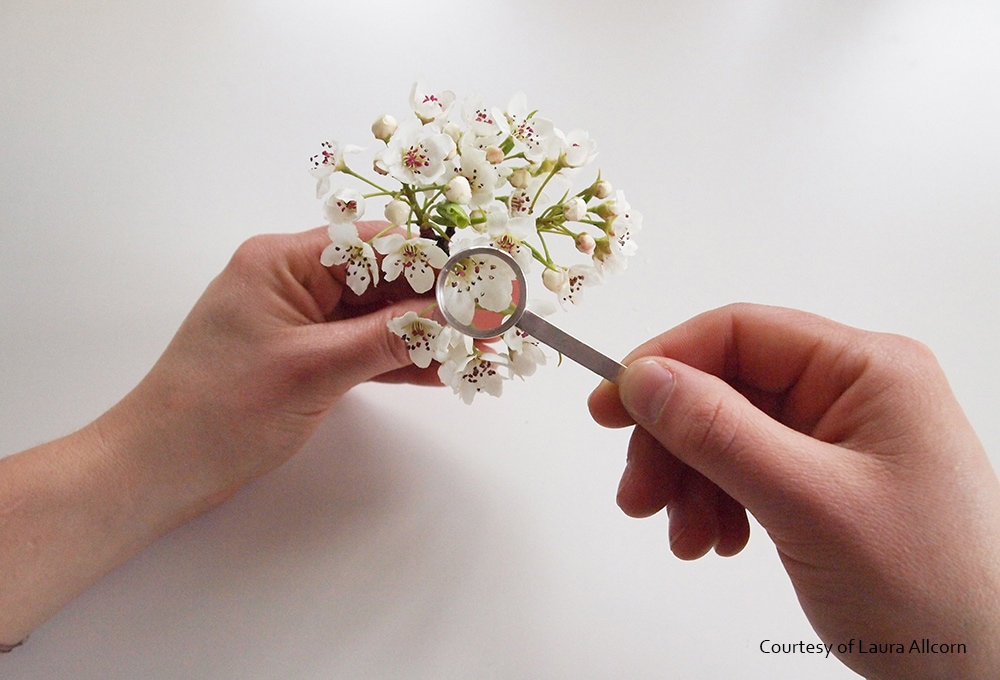 The Human Pollination Project (ヒューマンポリネーションプロジェクト)